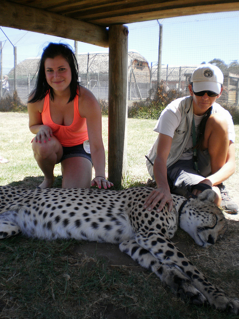 cheetah petting, South Africa