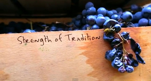 strength of tradition video wine italy