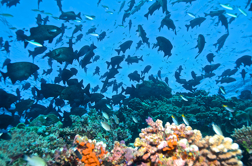 No fish on the reef? Think again!