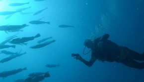 Man diving in the ocean with fish
