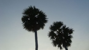 Two palm trees at dusk