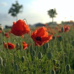 World War I's 100th Anniversary – Places to Remember