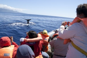 Azores_Whales