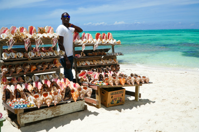 Conch shells in Turks and Caicos