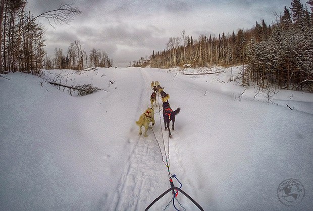 DogSledding in Quebec