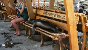 sea-lion-on-bench