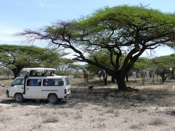 tourse expert vicky young on safari in africa