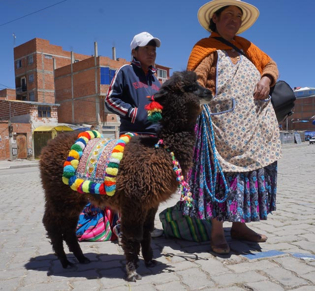 little alpaca and owner in bolivia