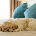 Pet Friendly Hotels in the Vancouver Area