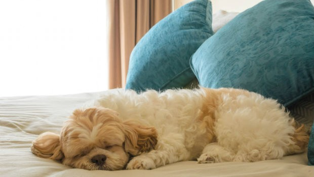 Pet Friendly Hotels In The Vancouver Area Flight Centre