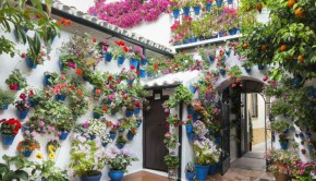 signature traditional blue flower pots in cordoba spain