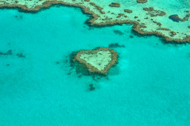 heart shaped coral reef in the whitsundays australia