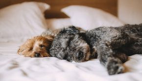 dogs sleeping in a bed