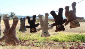 teddy bears clothesline charity trip guatemala