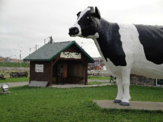 giant cow new liskeard large holstein ontario canada landmark