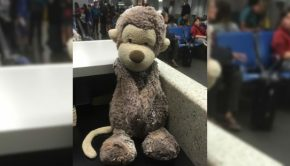 missing westjet monkey stuffed toy newfoundland airport kristen sellars facebook