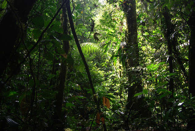 jungle in ecuador