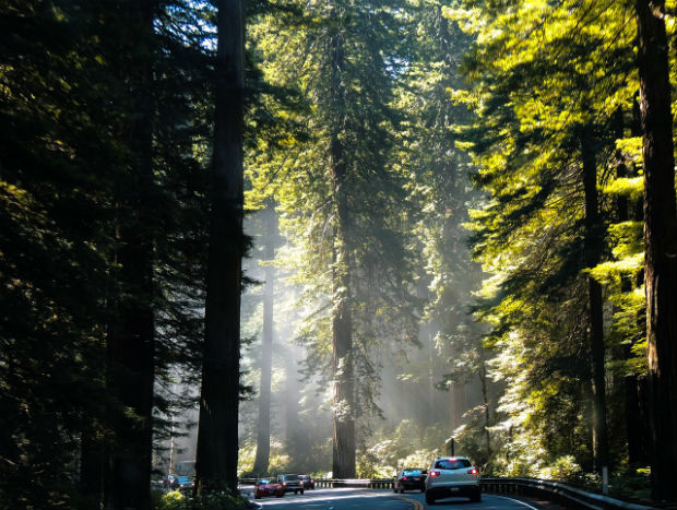 san-fran-california-redwoods