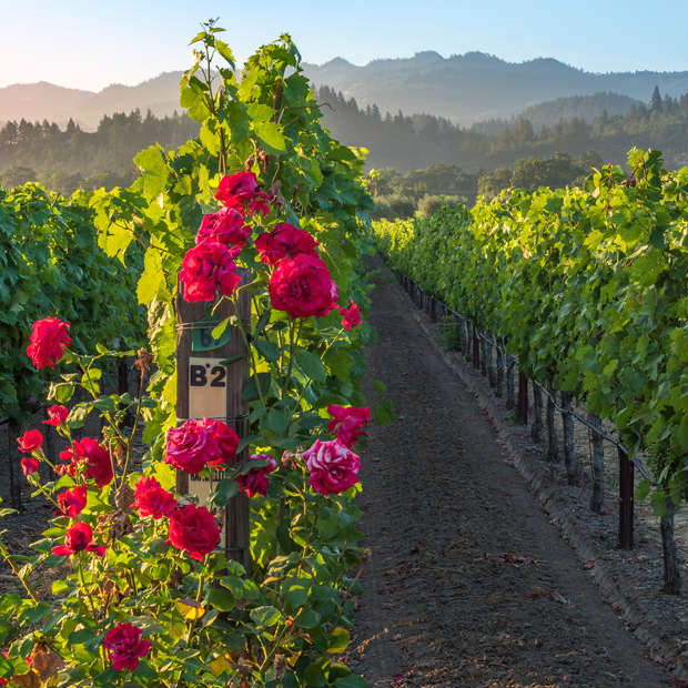 The beautiful vineyards of Napa Valley - Enjoy a romantic retreat for two