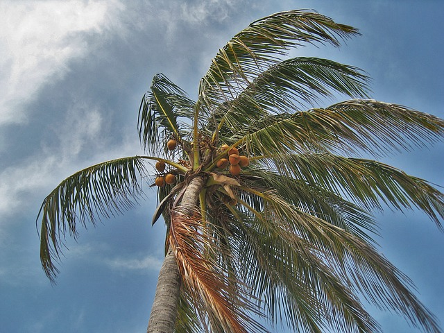 palm-tree-in-storm-smartcare-insurance-with-flight-centre-business-travel