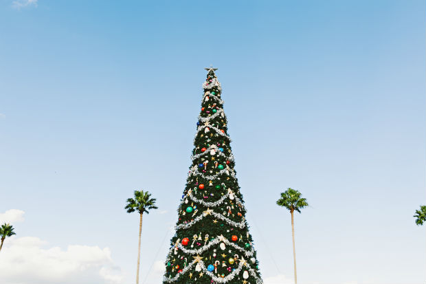 miami-events-enchanted-forest-giant-christmas-tree-with-palms