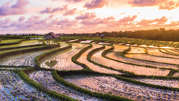 ride paddy field in bali
