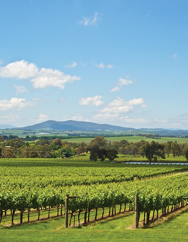 Photo of Yarra Valley Wineries Vineyards in Melbourne, Australia