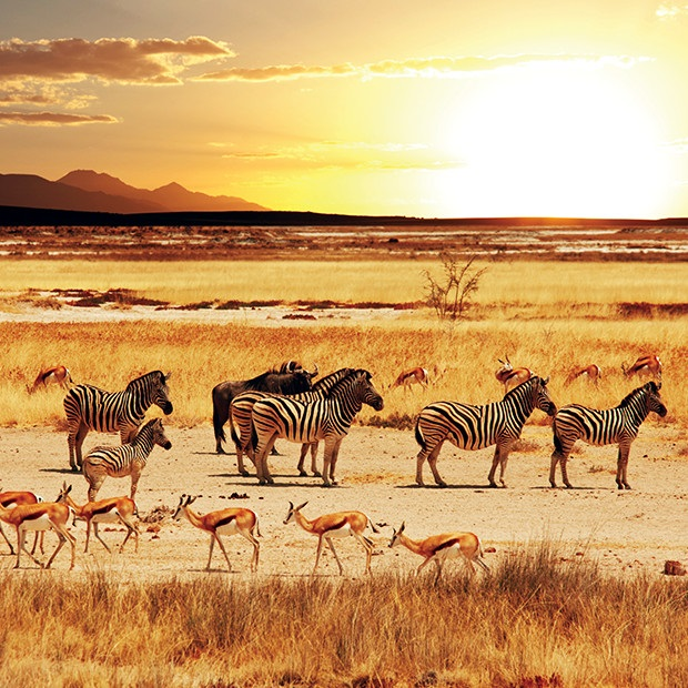 bucket-list-tours-safari