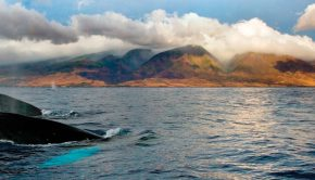 Maui attractions