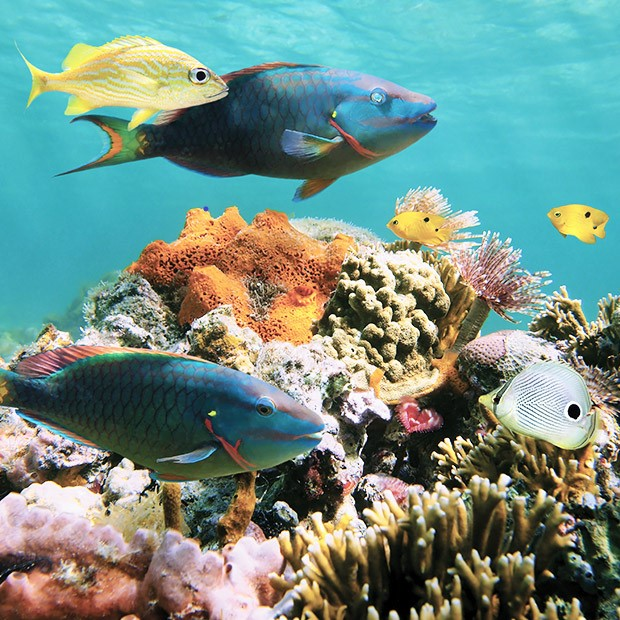 things-to-do-cozumel-snorkelling-tours-reefs