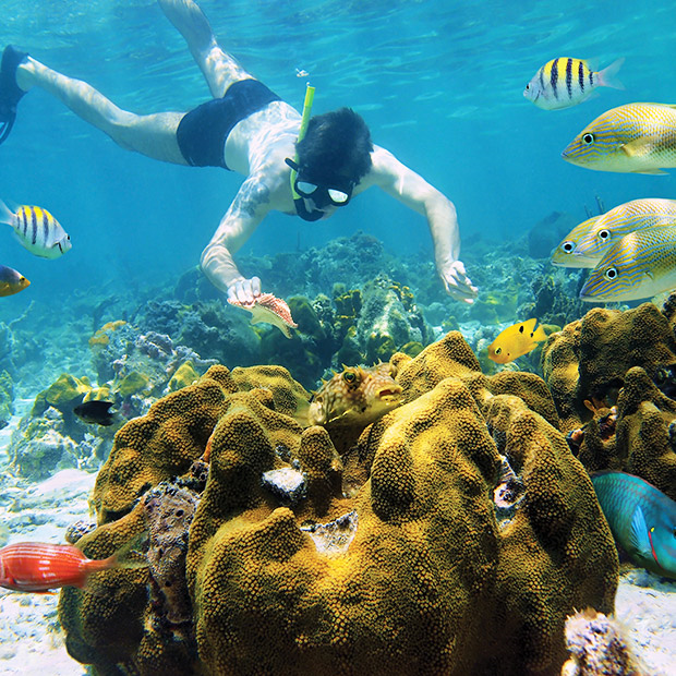 things-to-do-in-cozumel-snorkelling-tours-diver-admires-colourful-reef