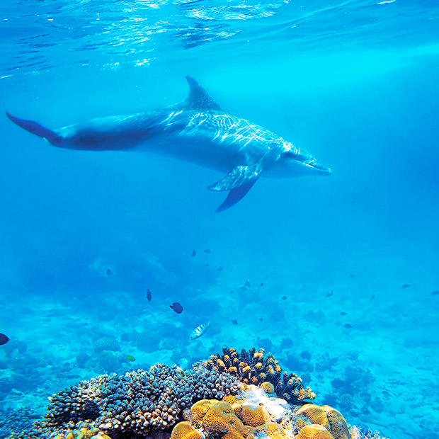 things-to-do-in-cozumel-snorkelling-swimming-with-wild-dolphin