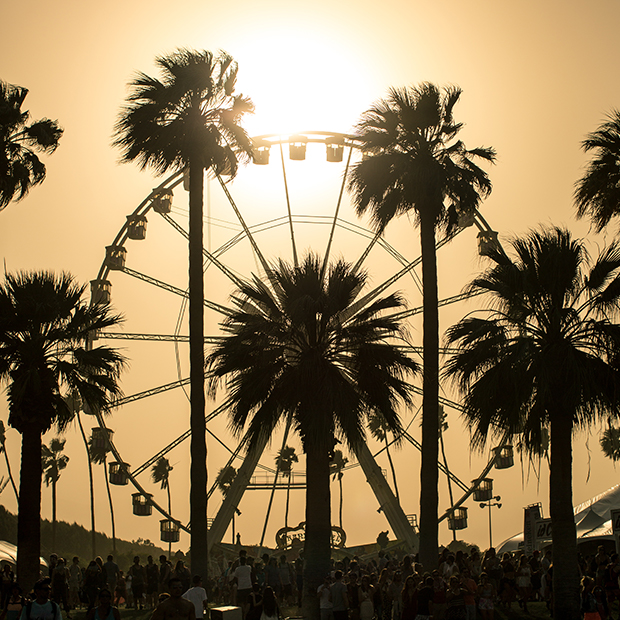 coachella sunset behind palm trees and a ferris wheel