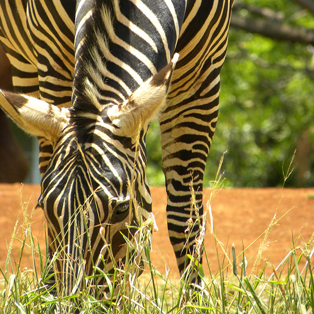 Things to do in Hawaii with kids zoos