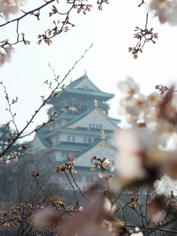 beautiful-osaka-castle-in-the-mist-with-cherry-blossoms-japan-travel