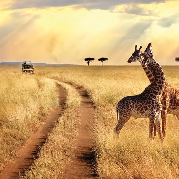 top-places-to-visit-2019-south-africa-giraffes-in-the-grass-serengeti-tanzania