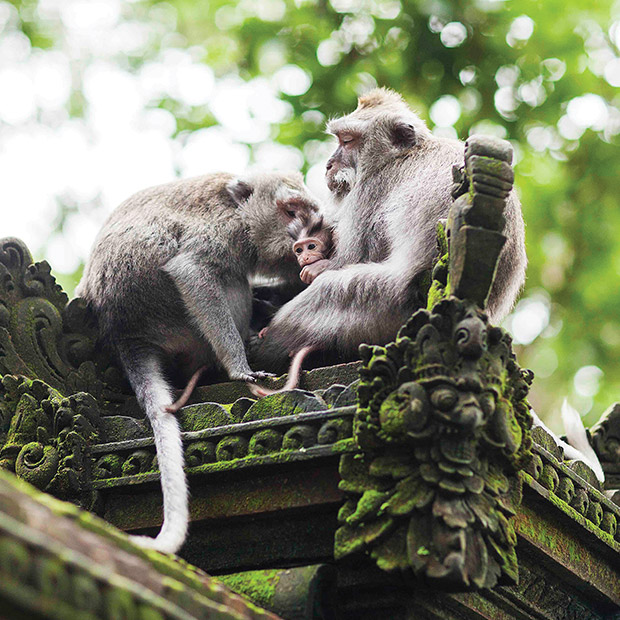 Bali attractions Monkey Forest