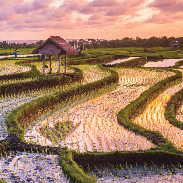 Bali attractions rice terraces