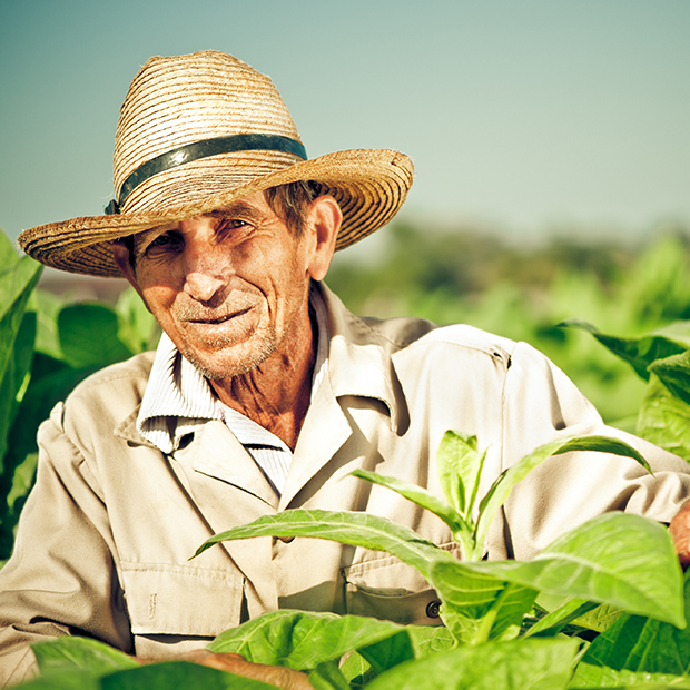 man in a tobacco field