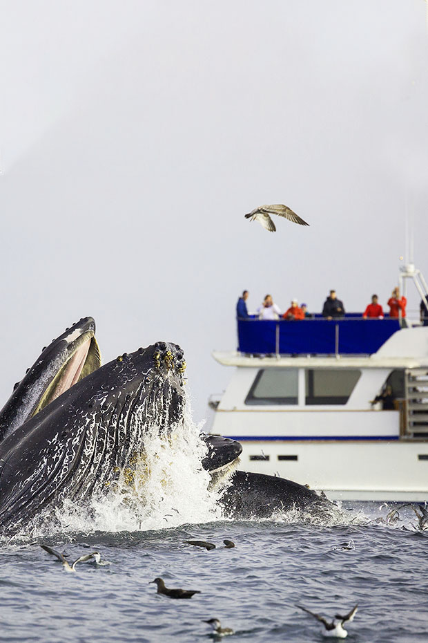 Puerto Vallarta whale watching boat tours