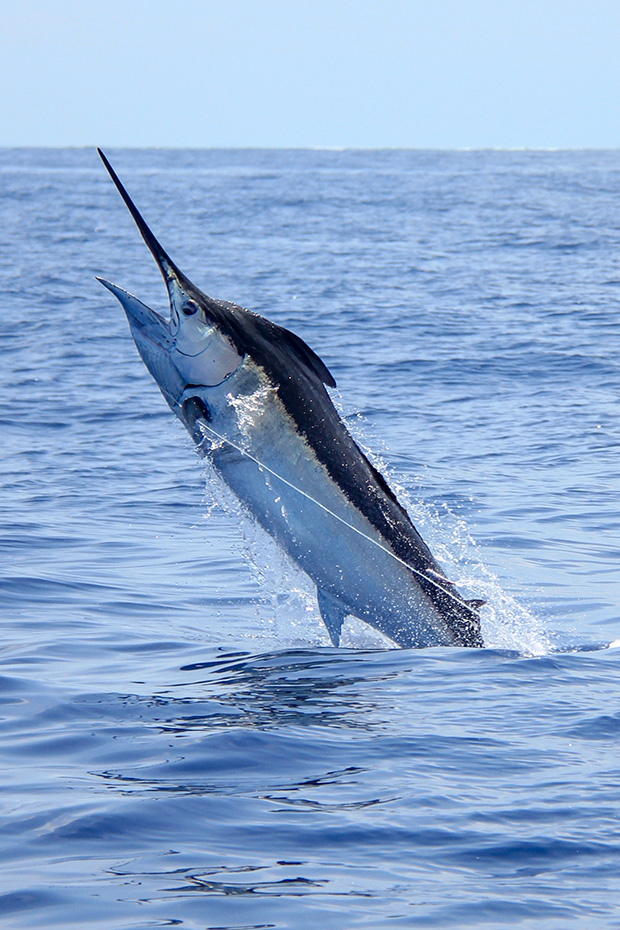 Things to do in Cabo San Lucas, marlin fishing