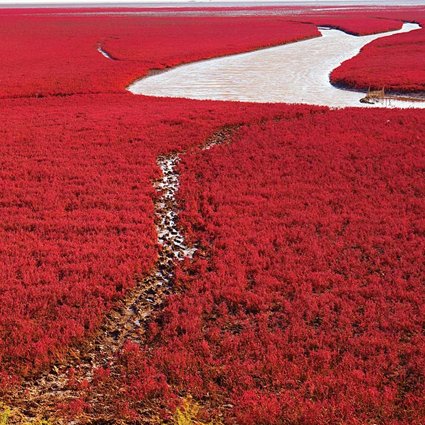 solo travel Red Beach Panjin China