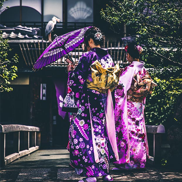 japanese-women-in-purple-kimonos-stand-with-backs-facing-camera-holding-parasols-in-traditional-garden