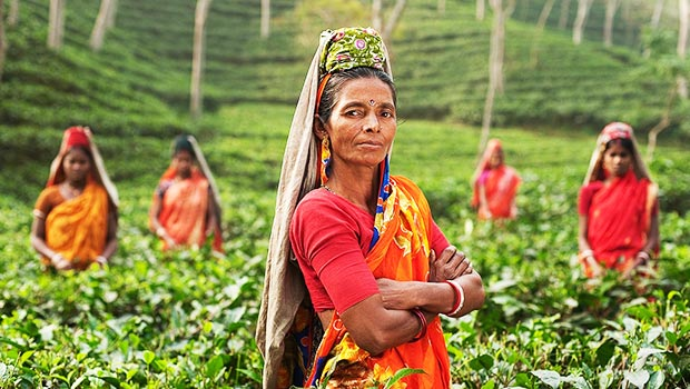 indian-woman-wearing-red-stands-in-green-tea-field