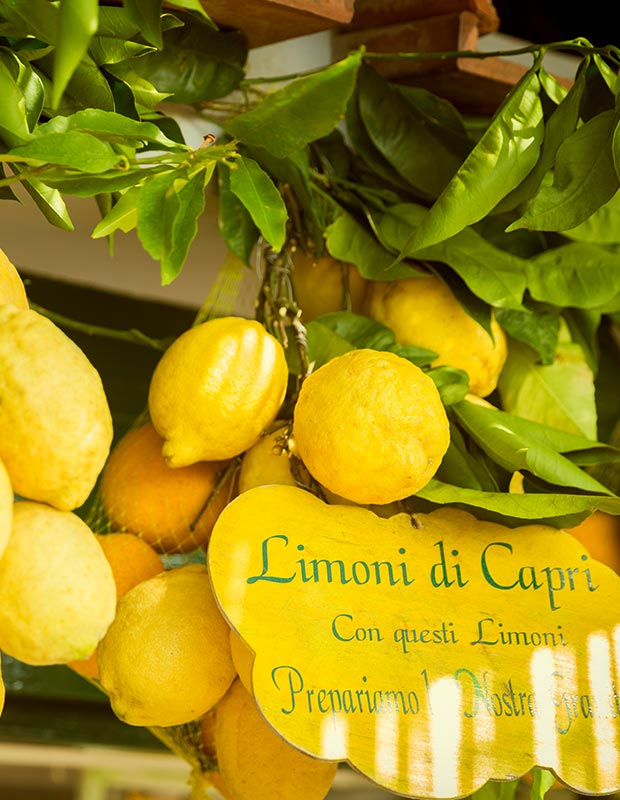 Amalfi lemons for limoncello