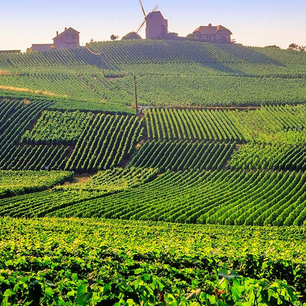 verdant-green-hills-of-vineyards-in-champagne-france