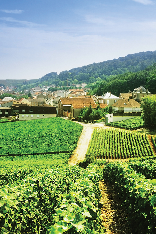 champagne wine region in france