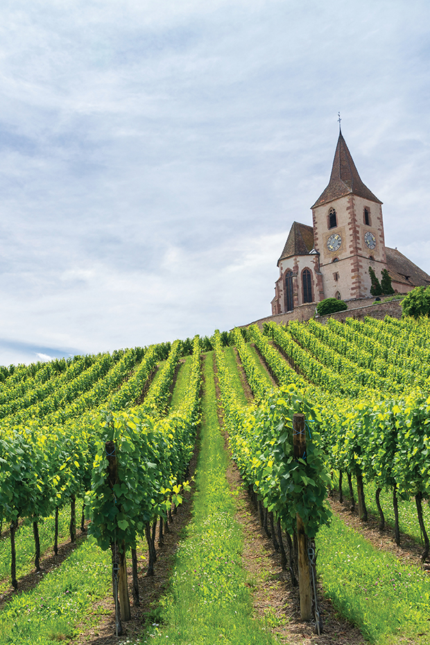 alsace wine region in france