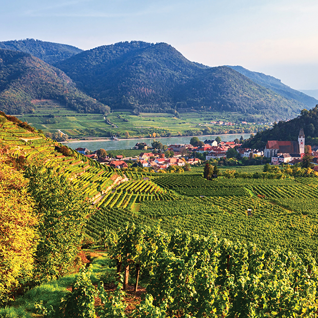 wine vineyards in wachau valley with moutains in the background