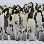 PENGUINS! Where & how to see penguins in their natural habitats